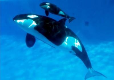 صور خلفيات عن الحوت الازرق