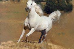 صورة تفسير رؤية الحصان في المنام