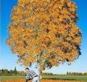 صور معلومات عن فصل الخريف