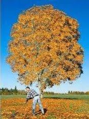 صورة معلومات عن فصل الخريف