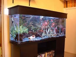 صورة اشكال احواض السمك