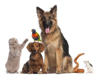 صور هل تعلم عن الحيوانات