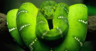 صور صور حيوان الاكوندا
