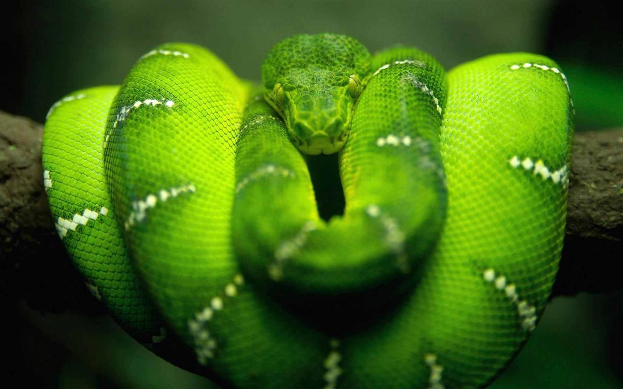 صورة صور حيوان الاكوندا