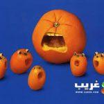 صور فواكه بتصميمات غريبة فاكهة اشكال غريبة