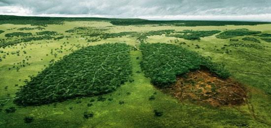 صور صور عن التلوث