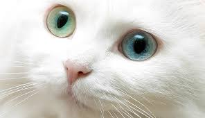 صور اسماء قطط