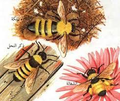 بالصور بحث عن الحشرات النافعة unnamed file 491