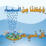 ضرورة الماء _ مفيدة للصحة